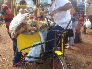 cochon grillé sur un marché